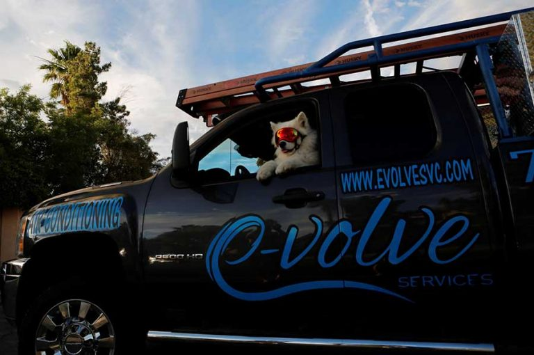 White dog sitting in the driver seat in the evolve services truck